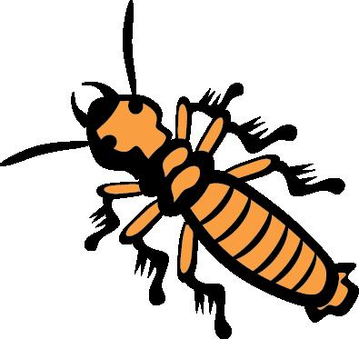Termite Control Caboolture - Sunshine Coast