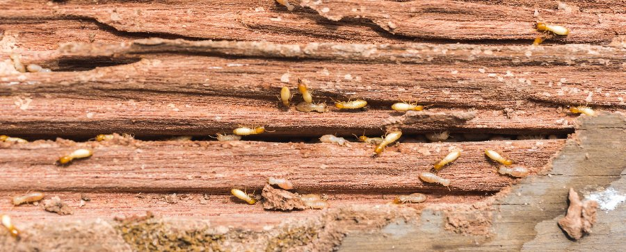 Termite Treatments Caboolture